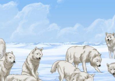 ᓂᕐᔪᑏᑦ ᑎᑎᕋᐅᔭᖅᓯᒪᔪᑦ: ᐅᑭᐅᑕᖅᑐᒥᐅᑦ ᐊᒪᕈᖏᑦ Animals Illustrated: Arctic Wolf (Inuktitut)