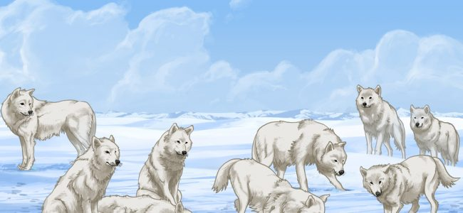 Animals Illustrated: Arctic Wolf (Inuktitut)