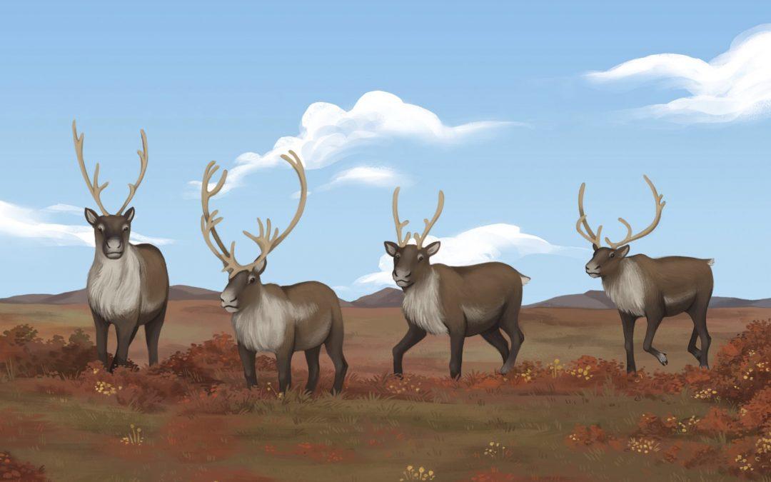 ᓂᕐᔪᑎᑦ ᑎᑎᕋᐅᔭᖅᓯᒪᔪᑦ: ᑐᒃᑐᒃ Animals Illustrated: Caribou